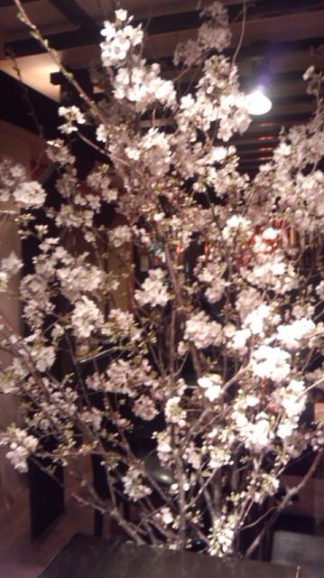 14周年桜祭り